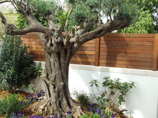 גדר לוחות עץ איפאה